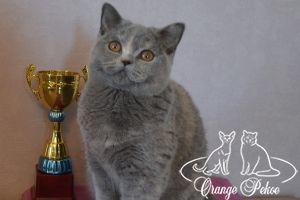 Подробнее: Наша юная звездочка Gloriya стала лучшим 2 котенком выставки