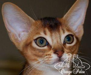 c_300_250_16777215_10_images_kittens_abi_noel.jpg