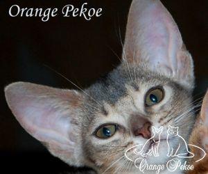 c_300_250_16777215_10_images_kittens_abi_shakti.jpg