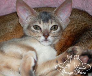 c_300_250_16777215_10_images_kittens_abi_shakti3.jpg
