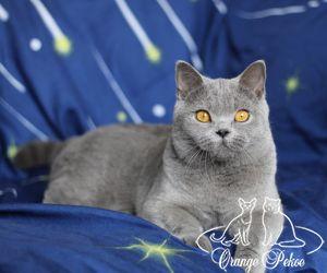 c_300_250_16777215_10_images_kittens_bri_pomet-h_27.jpg