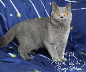 c_300_250_16777215_10_images_kittens_bri_pomet-h_28.jpg