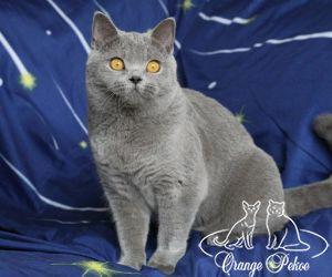 c_300_250_16777215_10_images_kittens_bri_pomet-h_31.jpg
