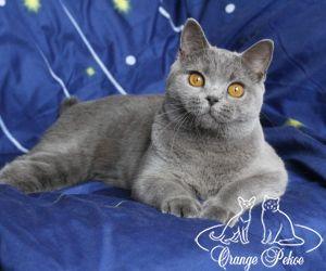 c_300_250_16777215_10_images_kittens_bri_pomet-h_35.jpg