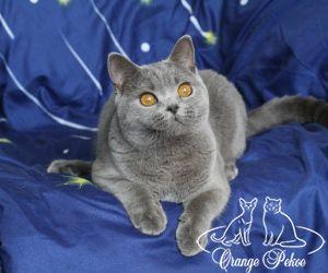 c_300_250_16777215_10_images_kittens_bri_pomet-h_38.jpg