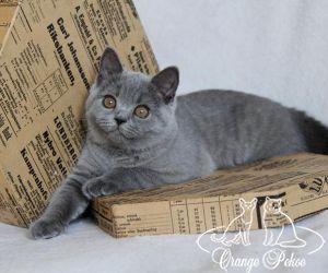 c_300_250_16777215_10_images_kittens_bri_pomet-h_harly35.jpg