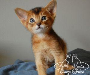 c_300_250_16777215_10_images_kittens_abi_dagaz_15m.jpeg