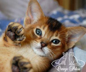 c_300_250_16777215_10_images_kittens_abi_dagaz_15m_1.jpeg