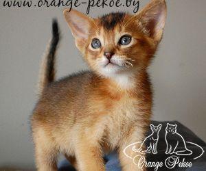 c_300_250_16777215_10_images_kittens_abi_dagaz_15m_2.jpeg