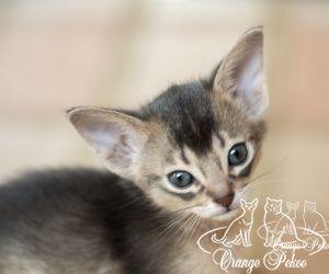 c_300_250_16777215_10_images_kittens_abi_pomet-u__DSC7834-1.jpg