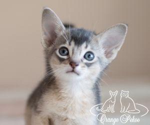 c_300_250_16777215_10_images_kittens_abi_pomet-u__DSC7841-1jpg.jpg