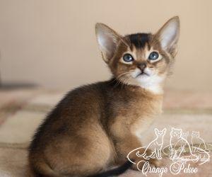 c_300_250_16777215_10_images_kittens_abi_pomet-u__DSC7852-1.jpg