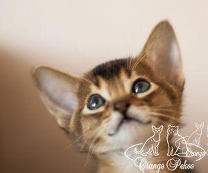 c_300_250_16777215_10_images_kittens_abi_pomet-u__DSC7853-1.jpg