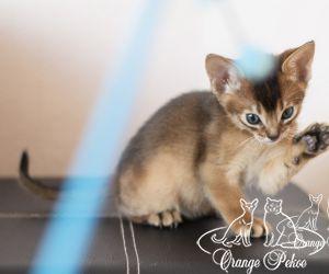 c_300_250_16777215_10_images_kittens_abi_pomet-u__DSC7857-1.jpg