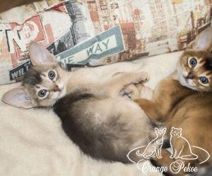 c_300_250_16777215_10_images_kittens_abi_pomet-u__DSC7889-1.jpg