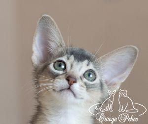c_300_250_16777215_10_images_kittens_abi_pomet-u__DSC8021-1.jpg