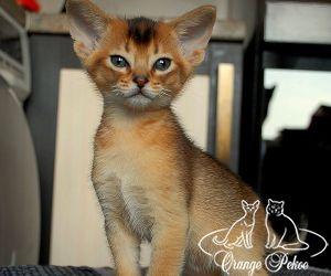 c_300_250_16777215_10_images_kittens_abi_raido_15m.jpeg