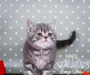 c_300_250_16777215_10_images_kittens_bri_pomet-c_anrishki.jpg