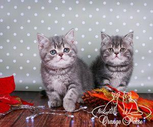 c_300_250_16777215_10_images_kittens_bri_pomet-c_anrishki2.jpg