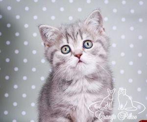 c_300_250_16777215_10_images_kittens_bri_pomet-c_anrishki3.jpg