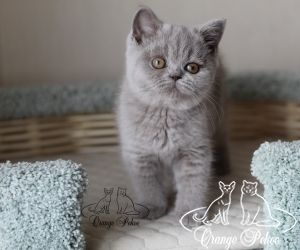 c_300_250_16777215_10_images_kittens_bri_pomet-d2_IMG_8112.jpg