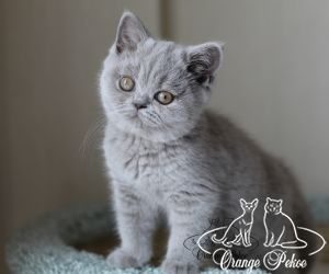 c_300_250_16777215_10_images_kittens_bri_pomet-d2_IMG_8284.jpg