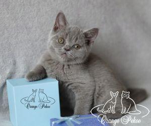 c_300_250_16777215_10_images_kittens_bri_pomet-d2_IMG_8459.jpg