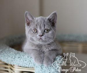 c_300_250_16777215_10_images_kittens_bri_pomet-d2_IMG_8501.jpg