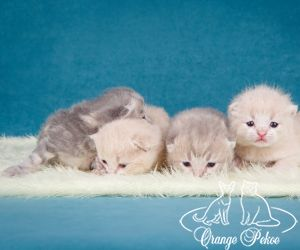 c_300_250_16777215_10_images_kittens_bri_pomet-e2_eshki.jpg