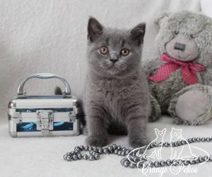 c_300_250_16777215_10_images_kittens_bri_pomet-e_Emely10.jpg