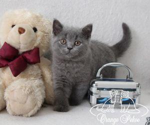 c_300_250_16777215_10_images_kittens_bri_pomet-e_Emely11.jpg
