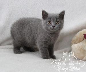 c_300_250_16777215_10_images_kittens_bri_pomet-e_Emely12.jpg