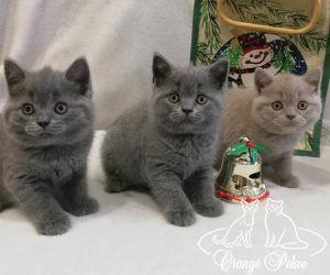 c_300_250_16777215_10_images_kittens_bri_pomet-e_Eshki55.jpg