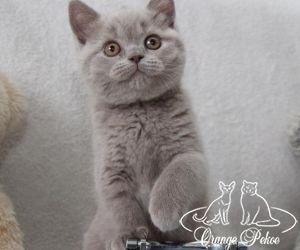 c_300_250_16777215_10_images_kittens_bri_pomet-e_Eva10.jpg