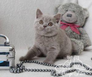 c_300_250_16777215_10_images_kittens_bri_pomet-e_Eva11.jpg