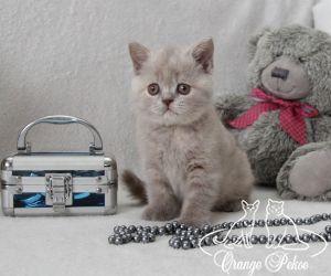 c_300_250_16777215_10_images_kittens_bri_pomet-f_IMG_2878.JPG