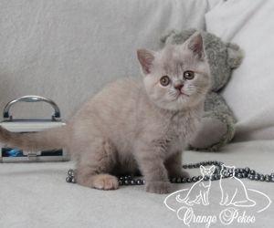 c_300_250_16777215_10_images_kittens_bri_pomet-f_IMG_2890.JPG