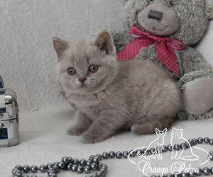 c_300_250_16777215_10_images_kittens_bri_pomet-f_IMG_2896.JPG