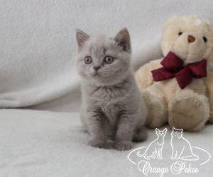 c_300_250_16777215_10_images_kittens_bri_pomet-f_IMG_2907.JPG
