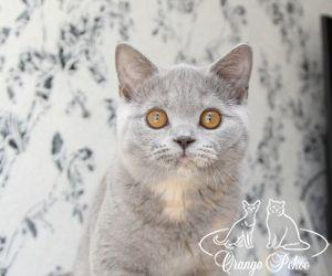c_300_250_16777215_10_images_kittens_bri_pomet-f_IMG_5683.JPG