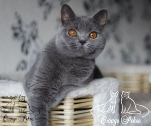 c_300_250_16777215_10_images_kittens_bri_pomet-h_harleyqueen2.jpg