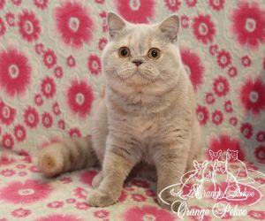 c_300_250_16777215_10_images_kittens_bri_pomet-i_IMG_8845.JPG