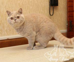 c_300_250_16777215_10_images_kittens_bri_pomet-i_IMG_9403.JPG