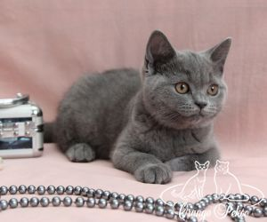 c_300_250_16777215_10_images_kittens_bri_pomet-n_IMG_9058.JPG