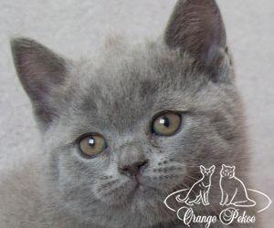 c_300_250_16777215_10_images_kittens_bri_pomet-n_nelson.jpg