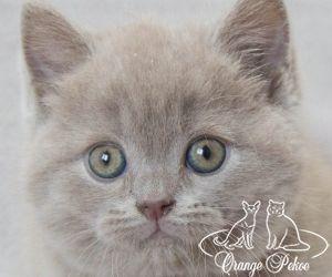 c_300_250_16777215_10_images_kittens_bri_pomet-n_nemo.jpg