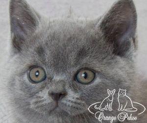 c_300_250_16777215_10_images_kittens_bri_pomet-n_night.jpg