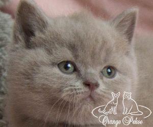 c_300_250_16777215_10_images_kittens_bri_pomet-n_norton.jpg