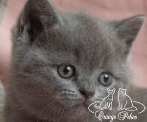 c_300_250_16777215_10_images_kittens_bri_pomet-n_nutella.jpg