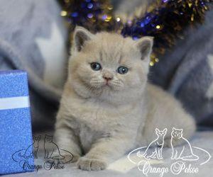 c_300_250_16777215_10_images_kittens_bri_pomet-p2_nosik.jpg